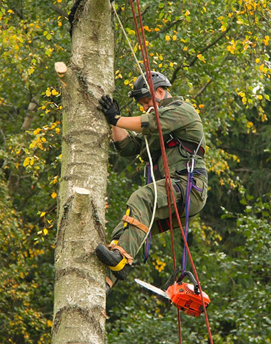 Chainsaw Course and Chainsaw Training leading to a chainsaw license and certificate